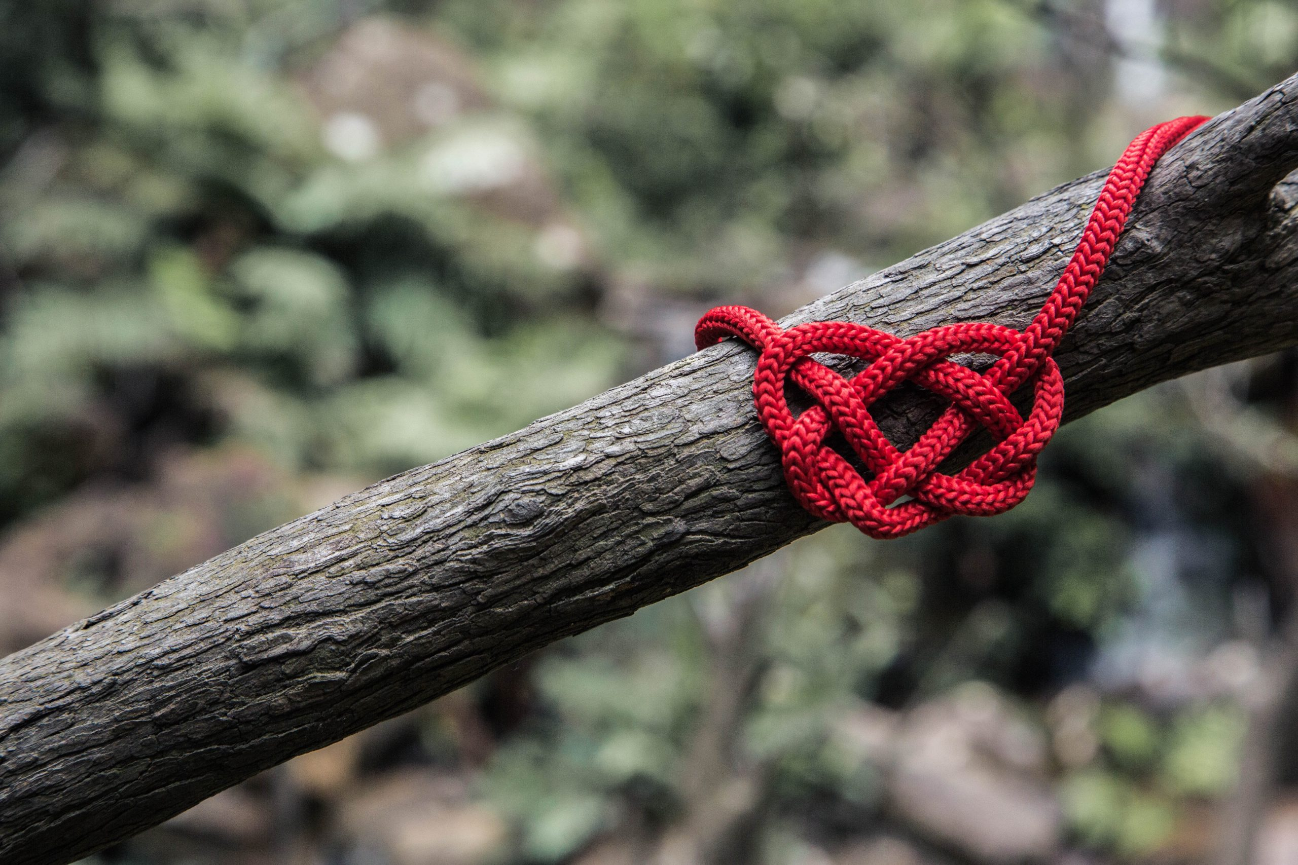 Red string tied in a knot on a tree to represent couples therapy Los Angeles