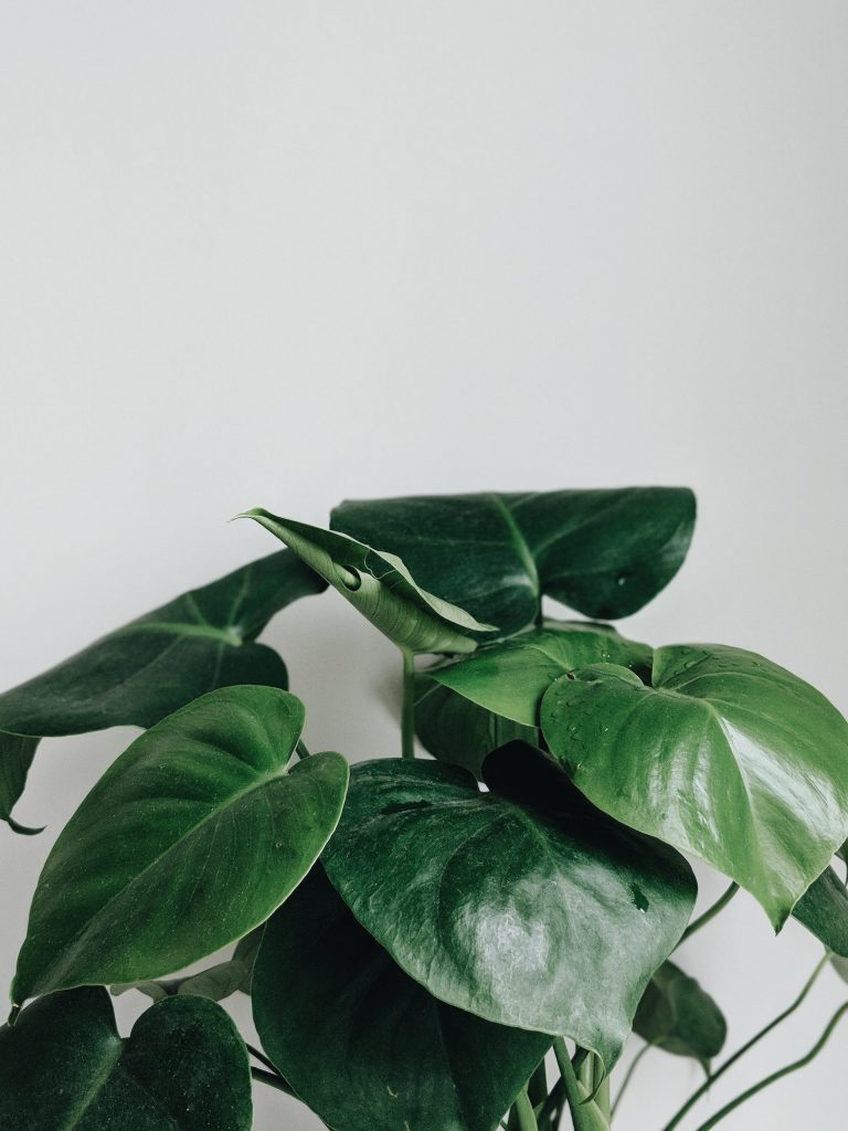 An indoor green plant to represent mental health resources