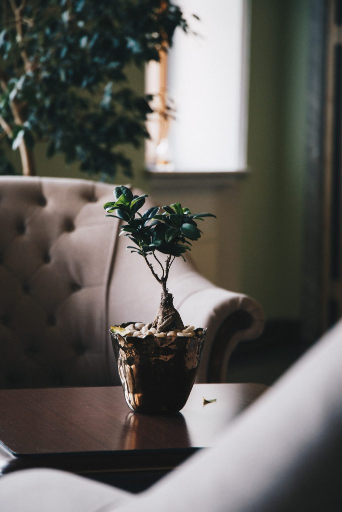 Plant sitting on coffee table to represent mental health resources
