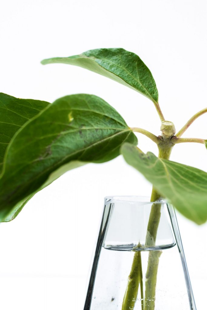 Plant growing in a glass of water to represent sex and intimacy therapy
